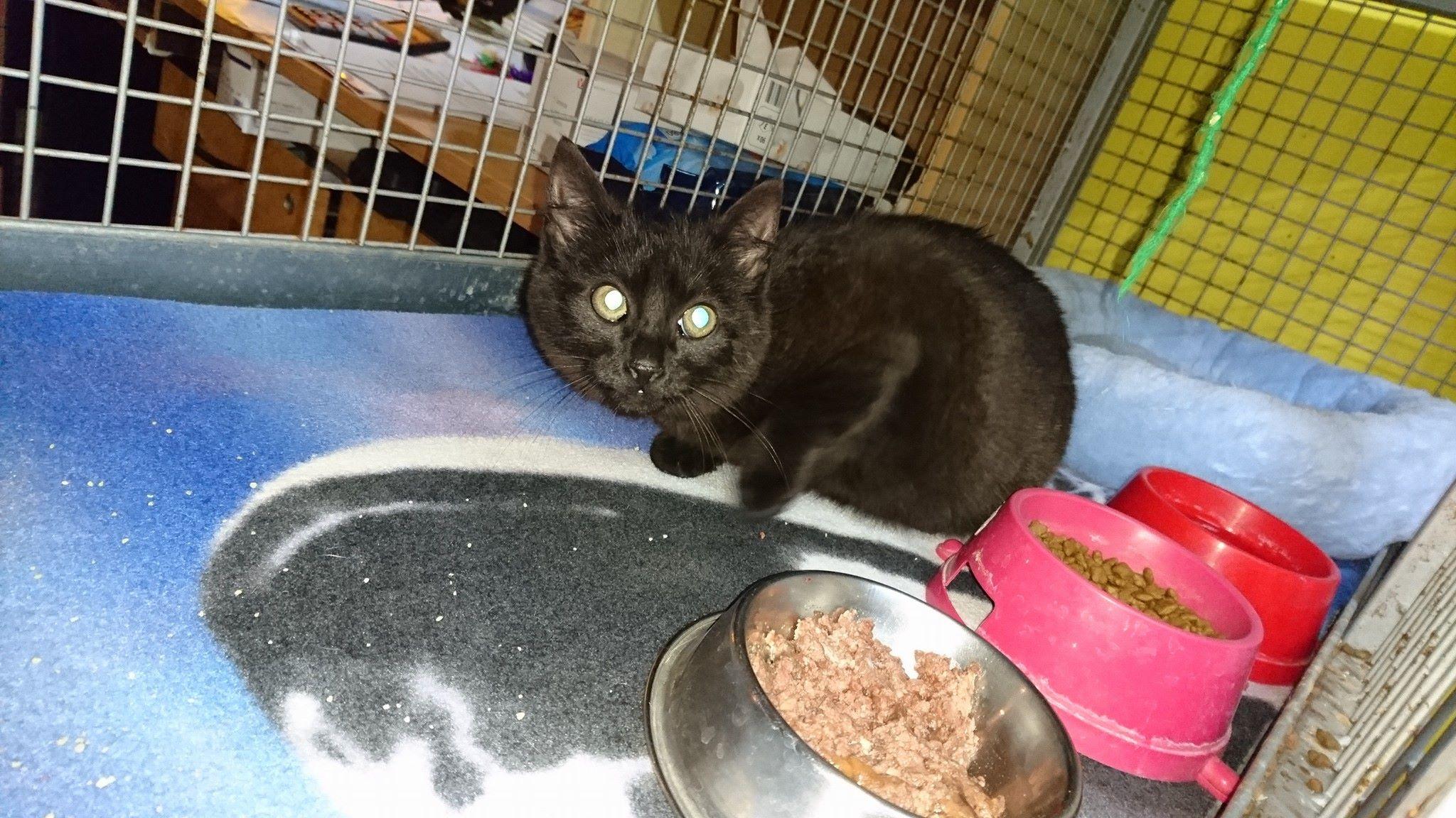 Černá mokrá kočička díra