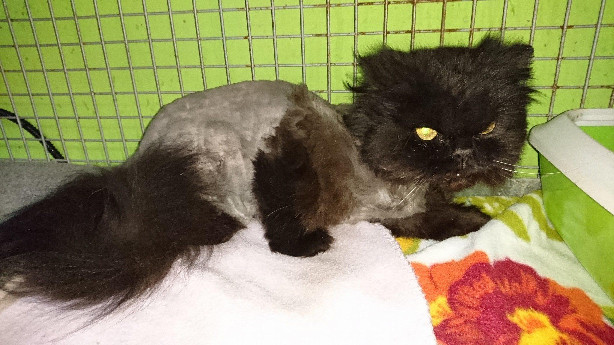 Prý se černé kočky špatně umisťují.