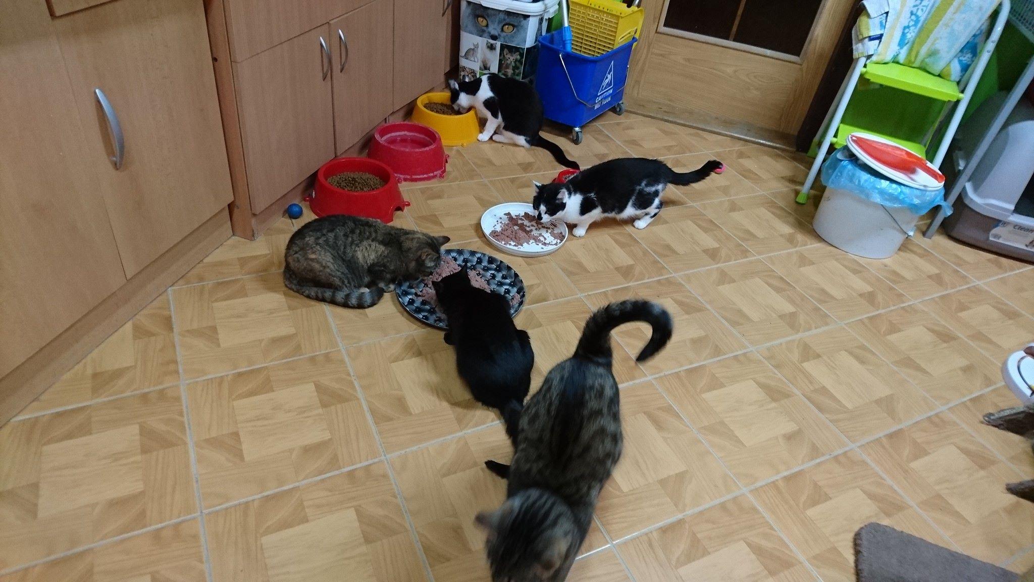 Černá mě jíst kočička
