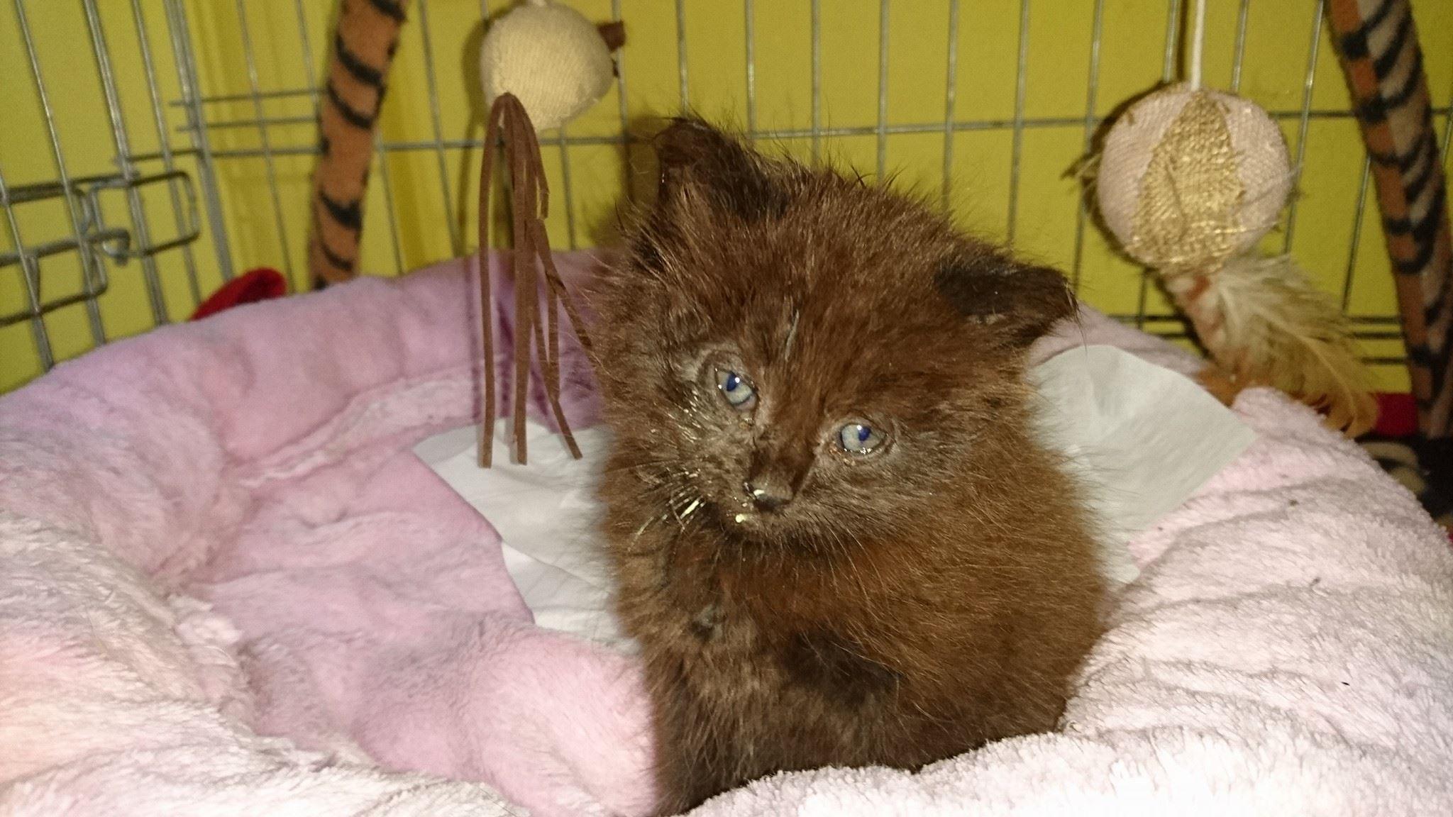 černá mastná kočička