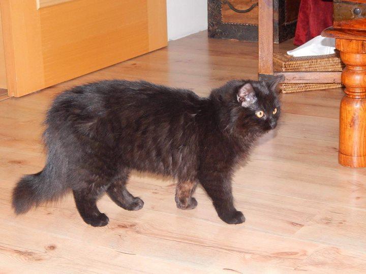 Černá kočička prdění