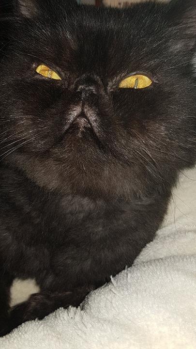 zničená černá kočička