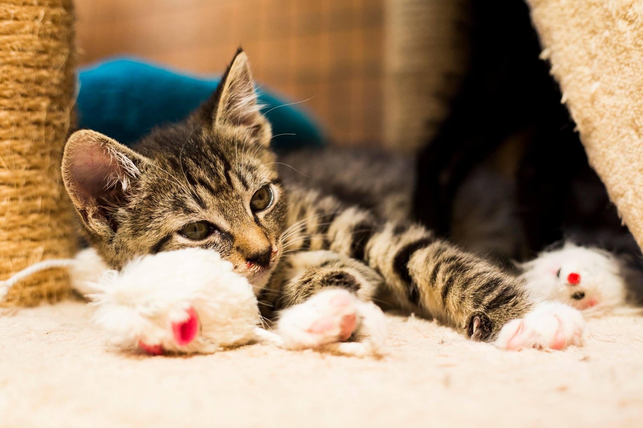 velké hračky v těsné kočičce