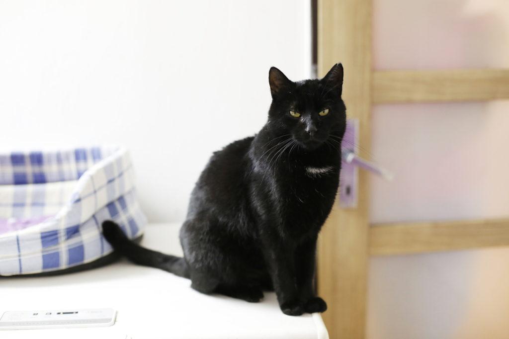 černá kočička chuť