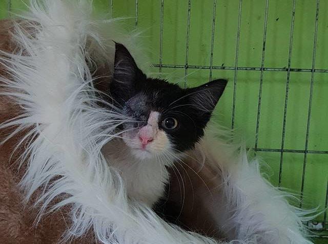 KOCOUREK VOČKO Z DOBŘINĚ Kotě o jehož příjmu jsme psali před...