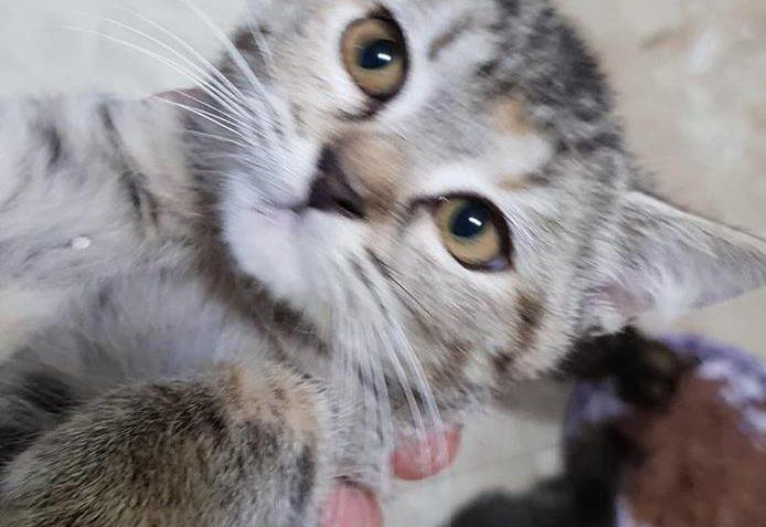 Kočičky ZULEJKA  a CECILKA  Jednu jsme prijali v týdnu druho...