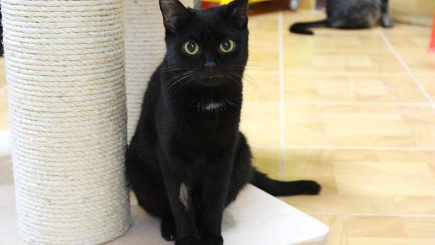 Černá starší kočička fotky