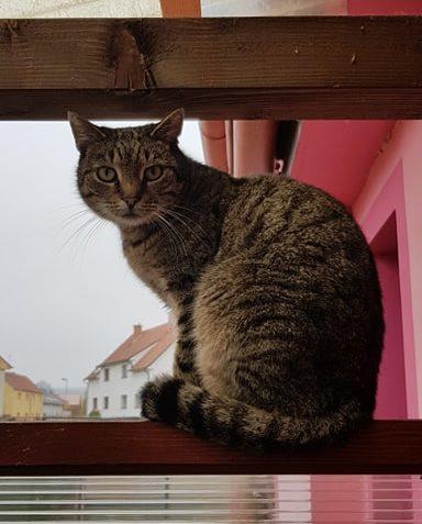 Kočka útulek