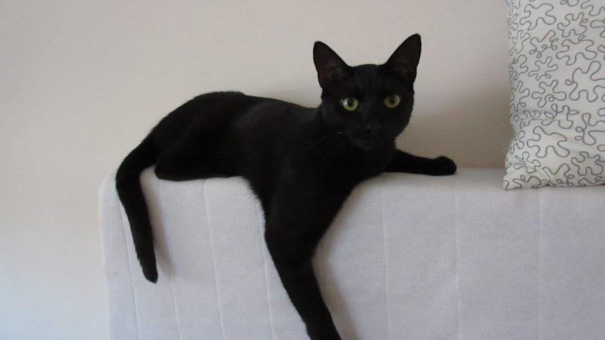 věku černá kočička