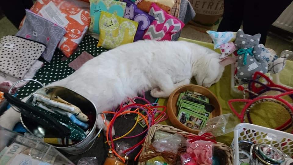 Dnes se konal na Kladně v kočičí kavárně U Kočičích tlapek j...