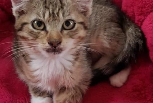 Kočičí domov Sluníčko- pomoc a azyl pro opuštěné kočičky