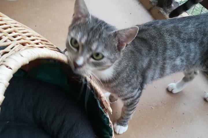 Poslední kočička Ťapinka, z přijatých 8 kočiček z Černoučka,...