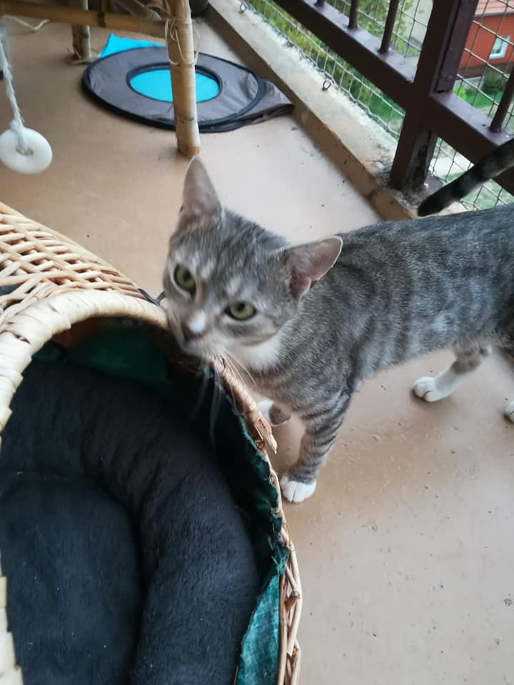 Mladí otevřené kočička obrázky