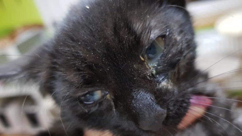 V Dobříni u pískovny se odchytilo další kotě. Je to s největ...