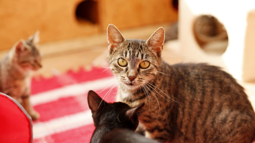 Borůvka - Kočičí domov Sluníčko