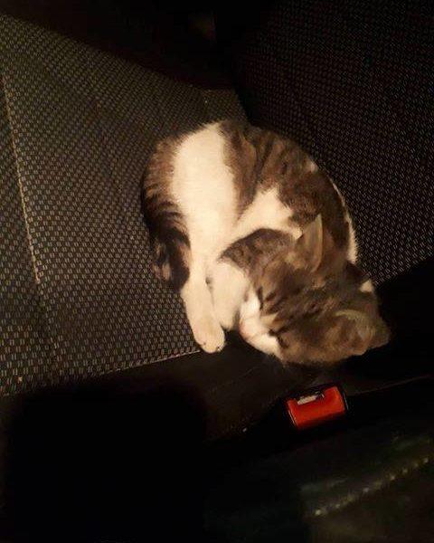 Hledá se domov pro tuto kočičku!!!...