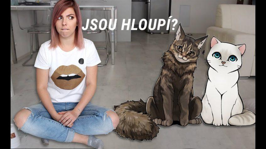 Testuju Kočíčí IQ | Mám doma hloupé kočky?