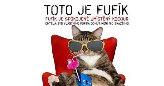 6. Umisťovací výstava koček bez domova