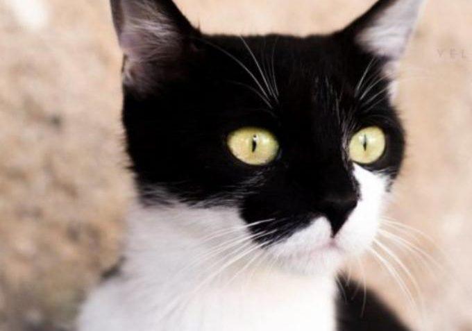 Bohemka ze Sluníčka - Kočičí přání