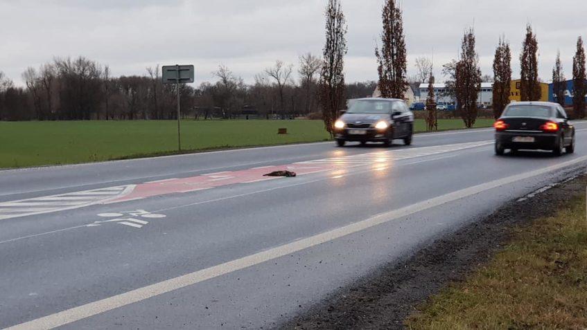 Dnes při cestě na kliniku nalezena kočička srážená autem. Bo...