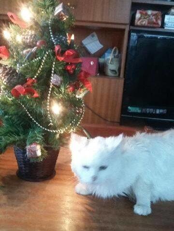 Krásné vánoce Vám a zvířátkům. Lilienka se netada fotí  jak ...