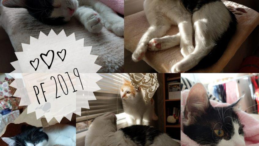 Krásný nový rok nám všem z nového domova přeje také Aperolka...
