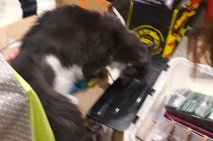 Přípravy na bazárek jsou v plném proudu..Kočičky naplno prac...