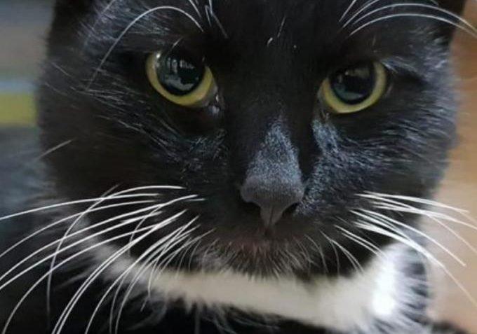 Polda ze Sluníčka - Kočičí přání