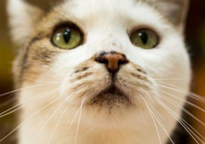 Sára ze Sluníčka - Kočičí přání