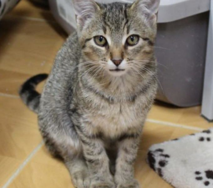 Sagi ze Sluníčka - Kočičí přání
