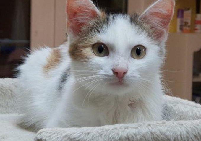 Vinnie ze Sluníčka - Kočičí přání