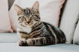 Jak probíhá adopce kočky z výstavy? Přibližně takto: Vyberet...