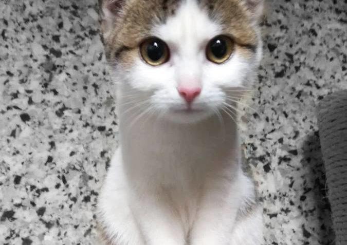 Koťata z dočasné péče u Nuclear Holocats hledají domov. Moc ...
