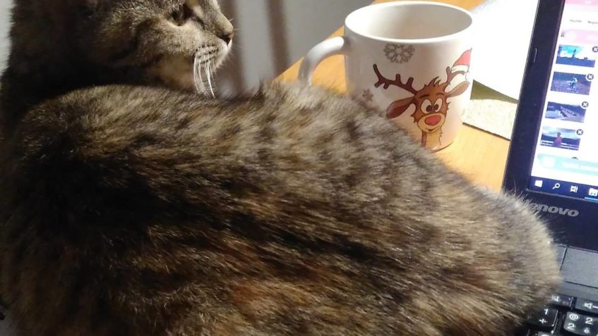 LÍZINKA u nás kočička ZULEJKA...