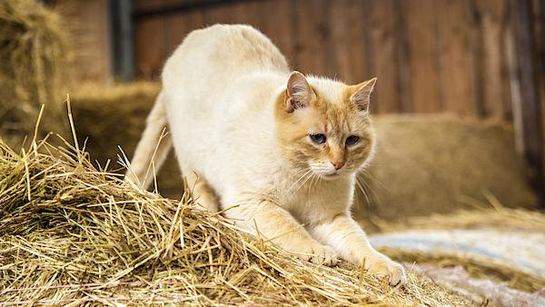 Na co si dát pozor při výběru kočky z útulku