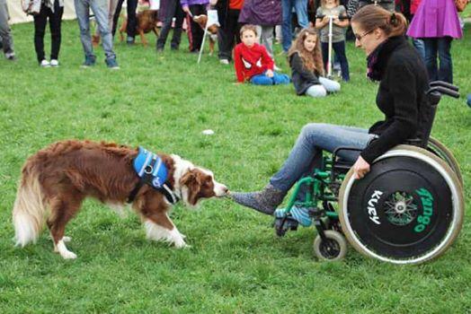 Nebyla by to naše výstava bez ukázek výcviku asistenčních ps...