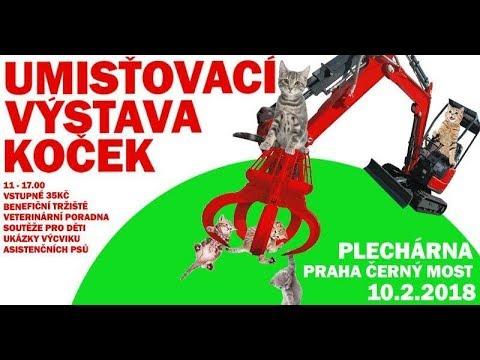 Umíťovací výstava koček - 10.2.2018 - Plechárna Praha Černý Most