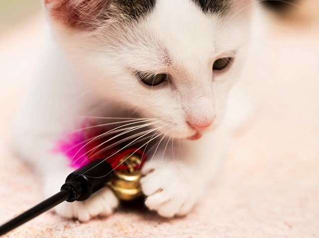 Včerejším dnes skončila krásná a velkolepá akce Kočičí přání...