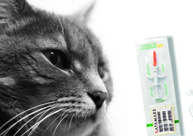 100 Mikročipů pro útulek - Kočičí domov Sluníčko z.s. - Kočičí přání
