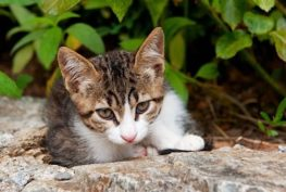 Myslivci střílejí tisíce koček