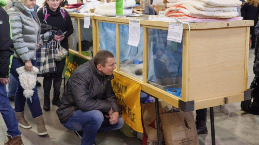 Zpravodajství z 6. Umisťovací výstava koček bez domova...