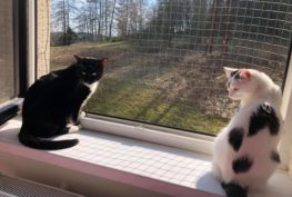 DOLFINKA (že Sluníčka) a její kamarádka JINGELS...