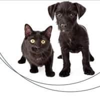 Přijďte si na veletr vybrat kočičího kamaráda z útulku....