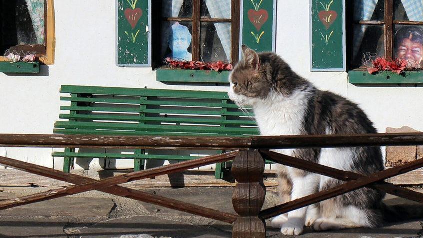 Nástrahy, které na kočku číhají u vás doma