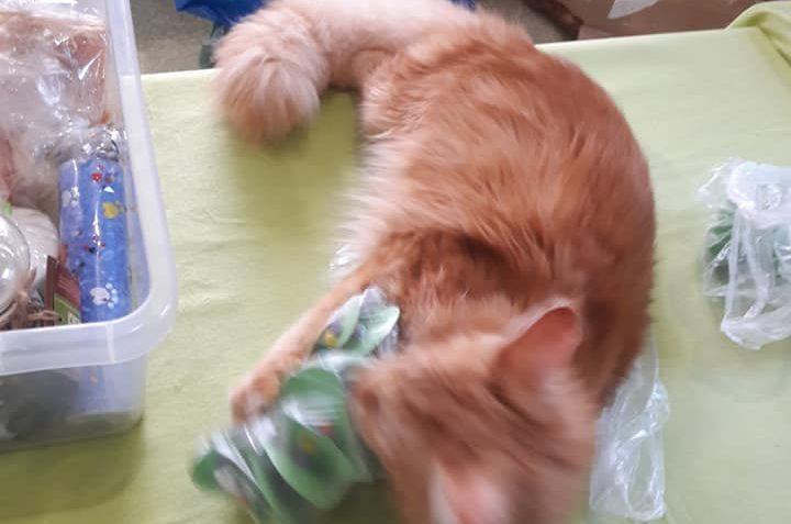 Přípravy na bazárek v kočičí kavárně U kočičích tlapek na Kl...