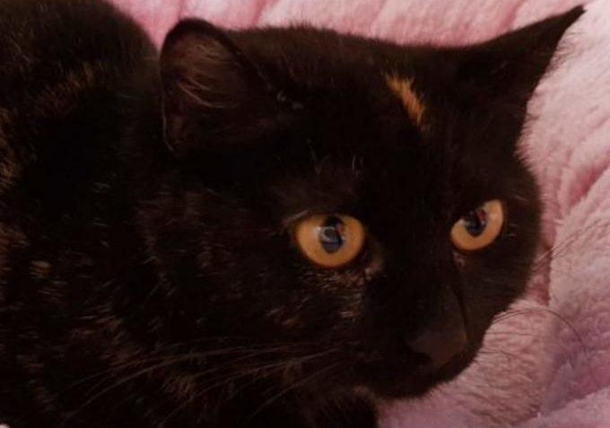 Astra ze Sluníčka - Kočičí přání