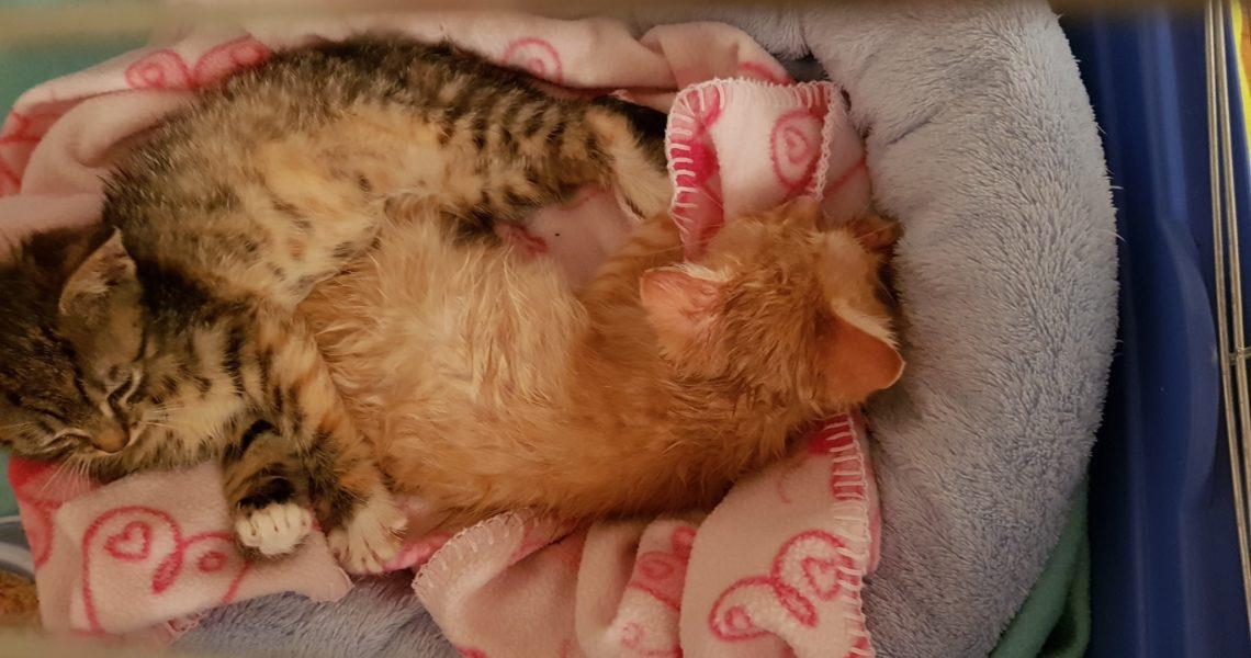 Mezi dnes přijatými sedmnácti kočičkami byli i tihle dva dro...