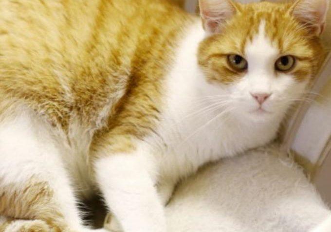 Ondrášek ze Sluníčka - Kočičí přání