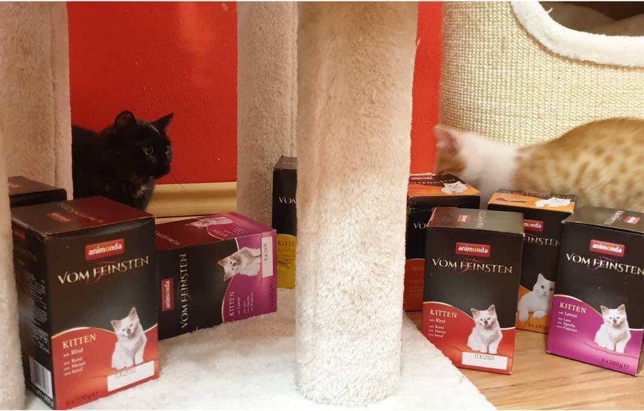Postupně fotíme kočky s dárky, které jste jim věnovali v rám...