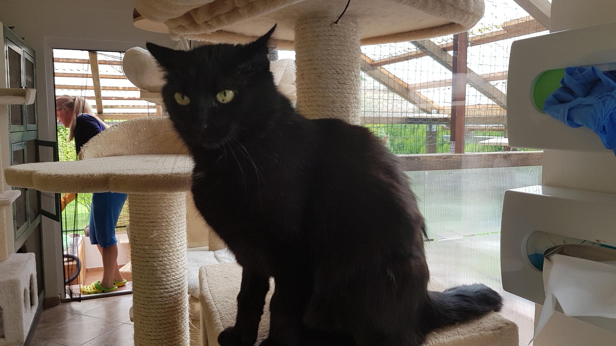 Opravdu mokrá černá kočička